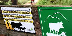 Tödliche Kuh-Attacke: 490.000 Euro Strafe