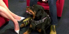 Süßester Hund Österreichs: Tagessieger ist