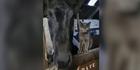 Dieses Pferd und diese Katze sind unzertrennlich