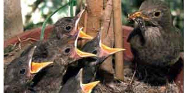 Vögel wählen bewußt gesündeste Nahrung aus
