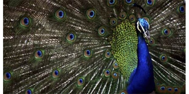Hunderte ausgestopfte Vögel gestohlen