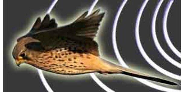 Magnetfeldlinien helfen Vögeln beim Navigieren