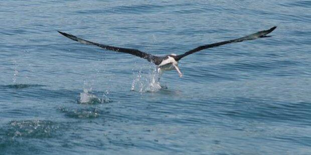 Vogel zieht verlorene Digicam aus See