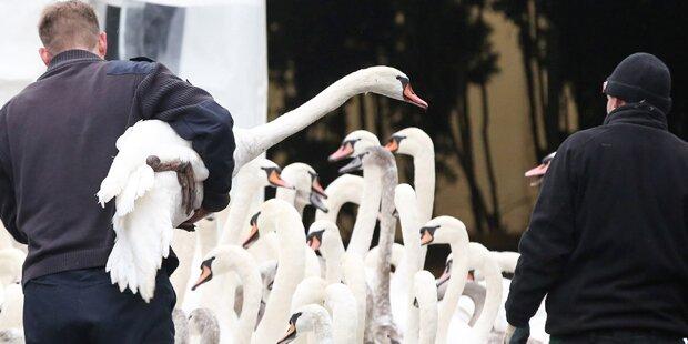 Forscher warnen vor Vogelgrippe-Horrorvirus