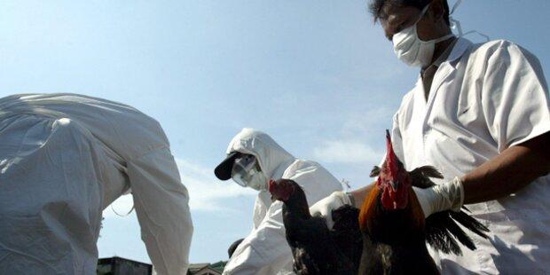 Vogelgrippe in Vietnam aufgetaucht