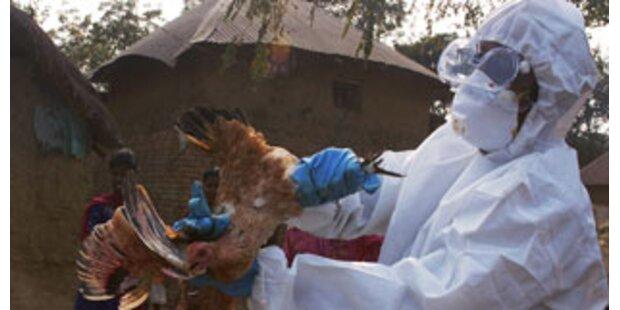 Vogelgrippe-Ausbruch in Togo