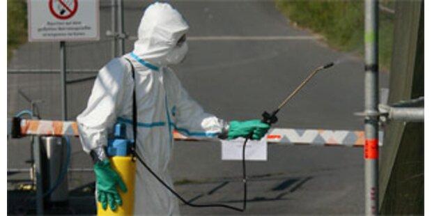 160.000 Enten wegen Vogelgrippe gekeult