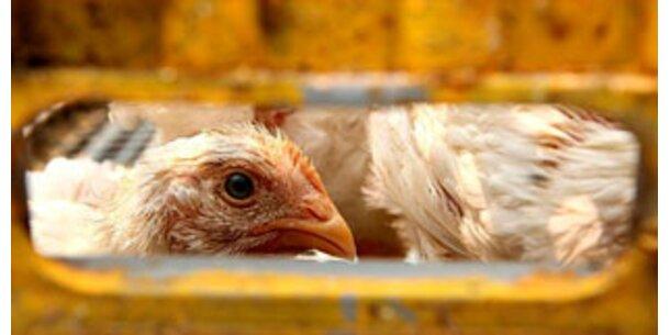 Vogelgrippe-Infektion von Mensch zu Mensch