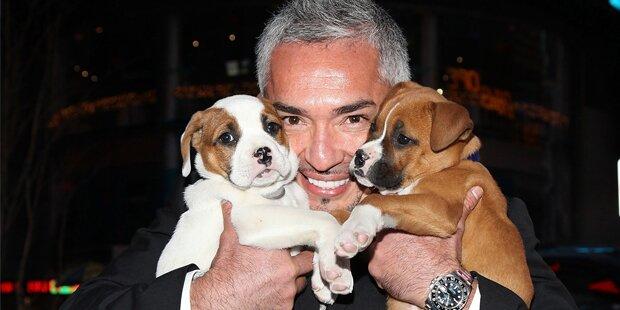 Hundeflüsterer in der Stadthalle