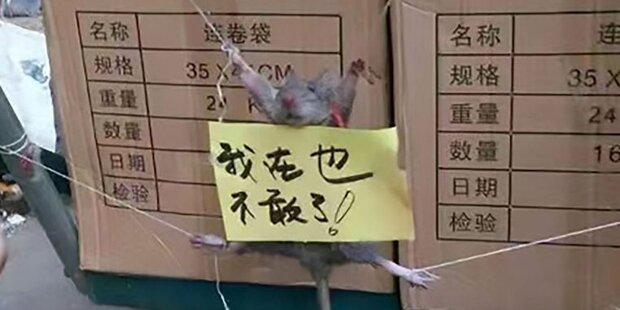 So grausam foltern chinesische Arbeiter diese Ratte