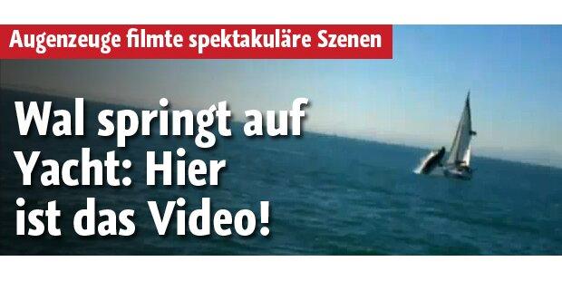 Wal springt auf Yacht: Video aufgetaucht