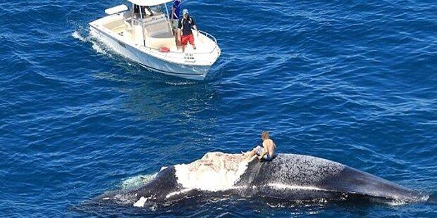 Mann auf totem Wal von Haien umzingelt