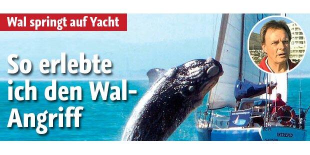 Wal springt auf Boot: Insassen berichten
