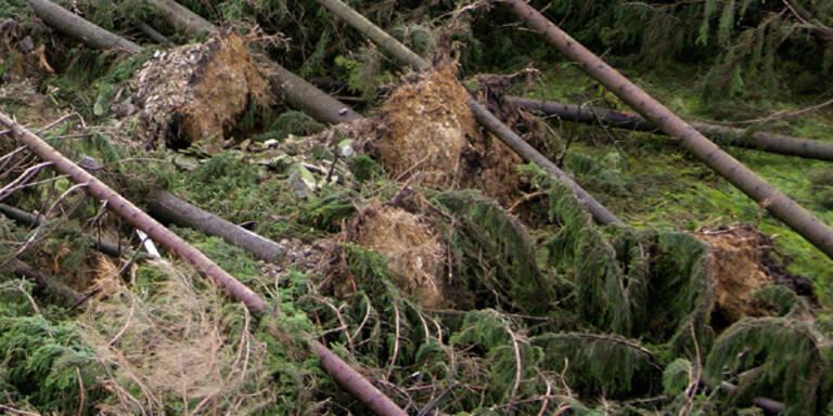 Schwere Sturmschäden im Burgenland