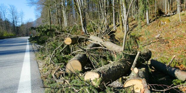 Kärntner Wälder sind kaputt