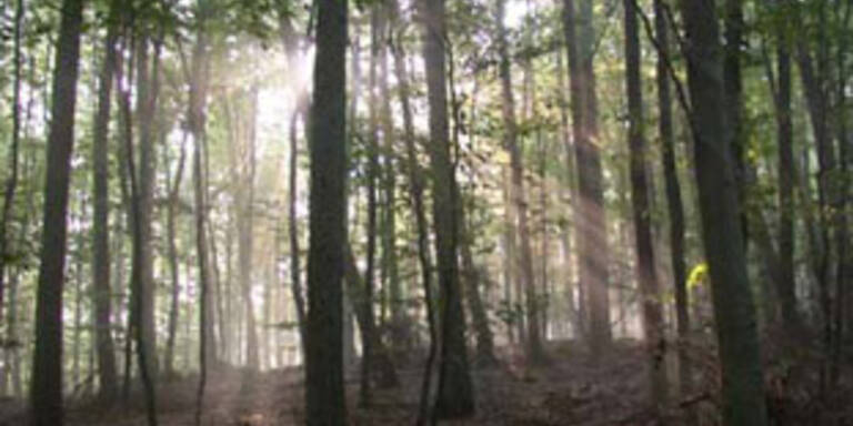 Zwei Babyleichen in deutschem Wald entdeckt