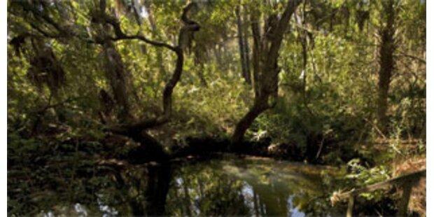 Zwei Buben hausten 10 Jahre im Wald in Frankreich
