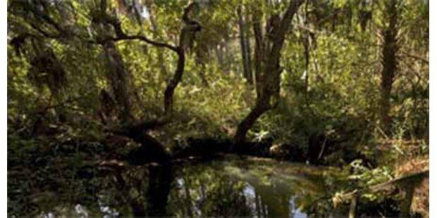 Pensionist bei Waldarbeiten gestorben