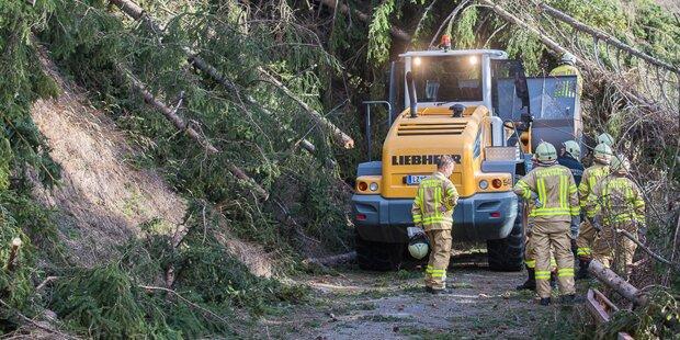 Baum erschlägt Forstarbeiter