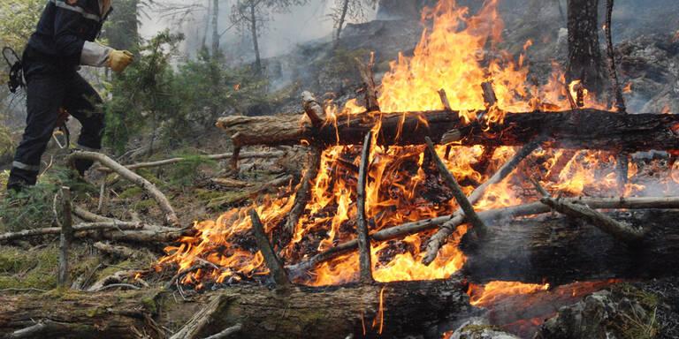 Brennendes Auto löste Waldbrandalarm aus