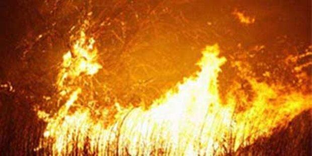 Waldbrand wütet vor Lissabon