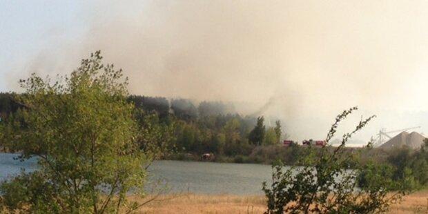 Wiener Neustadt: 20 Hektar Wald in Flammen