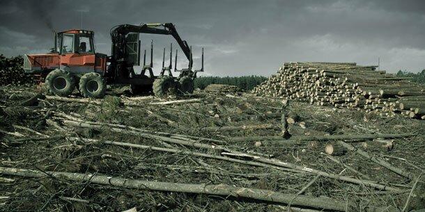Mehr Wald abgeholzt als aufgeforstet