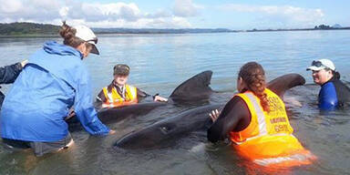 Bereits gerettete Wale verendet