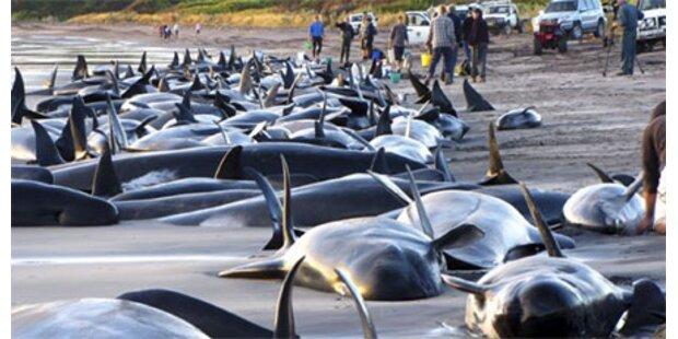 200 Wale und Delfine vor Australien gestrandet