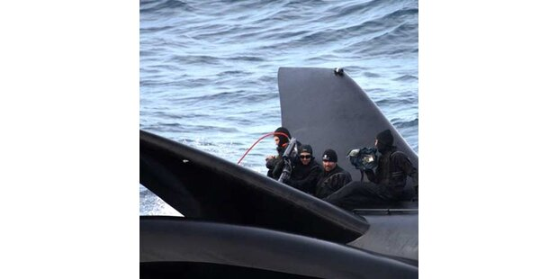 Walfänger versenken Tierschützer