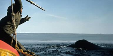 Japans Walfänger töten 170 Meeressäuger