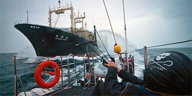 Japans Regierung hält am Walfang fest