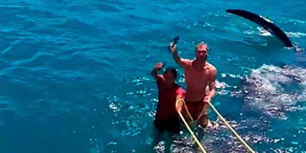 Touristen surfen auf dem größten Hai der Welt
