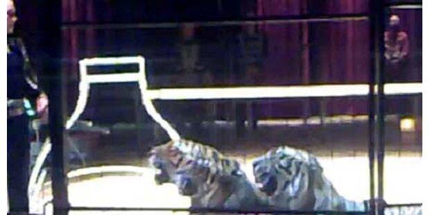 Verletzter Tiger-Dompteur spricht wieder