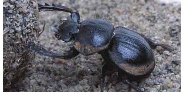 Ägypter tötet Töchter mit Insektenspray