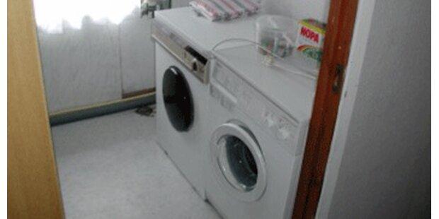 Kater überlebt 90-Grad-Waschgang