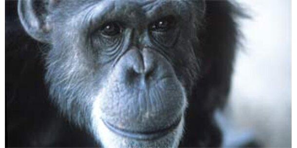 """Der erste """"sprechende"""" Affe ist tot"""