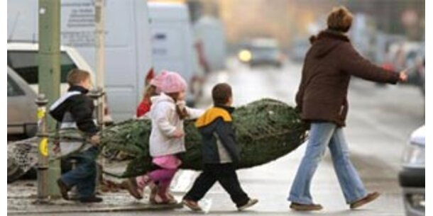 Import-Weihnachtsbäume werden heuer teurer