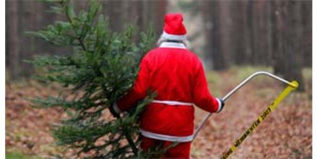 Auf Christbaumsuche drei Tage im Wald vermisst