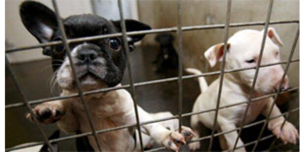 Behörden haben Tierfabriken im Visier