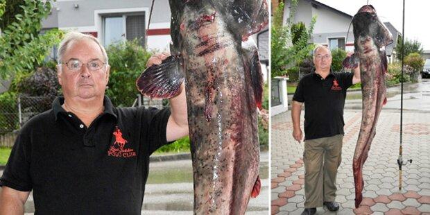 Sportfischer fängt Riesen-Wels