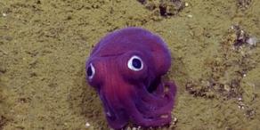 Surreales Wesen vor Kalifornien entdeckt