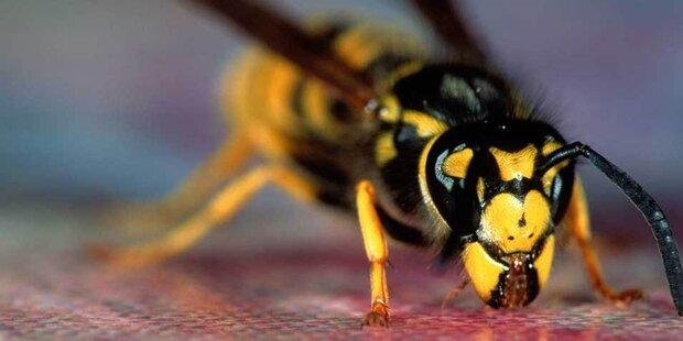 Das hilft gegen Wespen