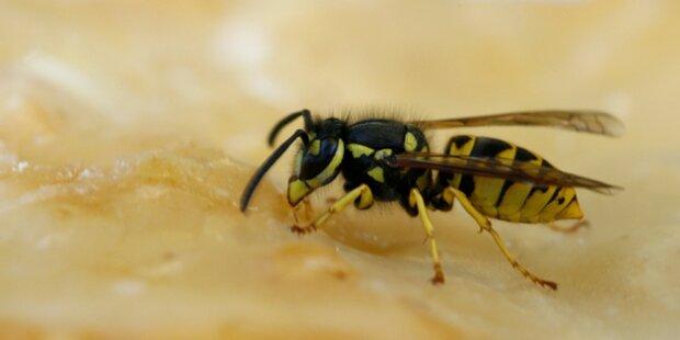 Wespenplage: Notfälle heuer verdoppelt
