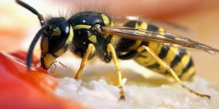 Das hilft nach dem Wespenstich