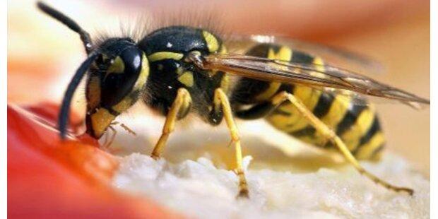 Wieder Tote nach Wespenstich