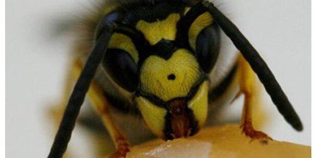 Steirer nach Wespenstichen bewusstlos