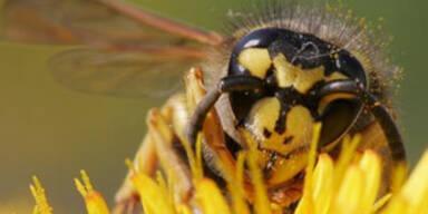 Wespenstich endet fast tödlich