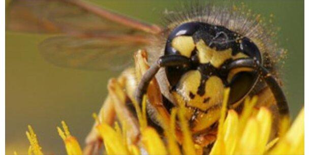 Hochsaison für Bienen, Wespen und Hummeln