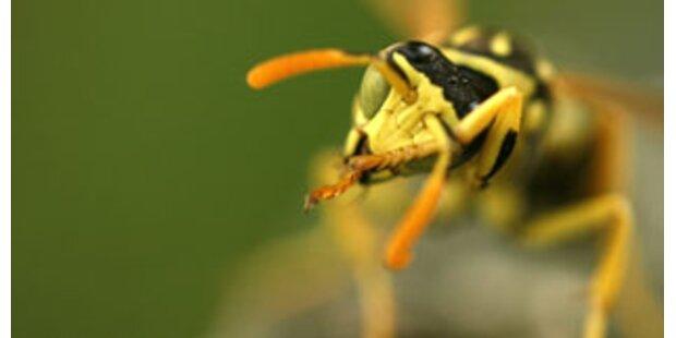 Schüler (17) von 20 Wespen gestochen